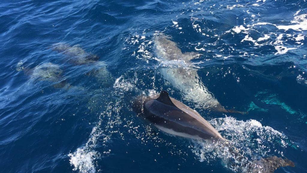 Delfines en la proa